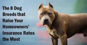 8 Dog Breeds
